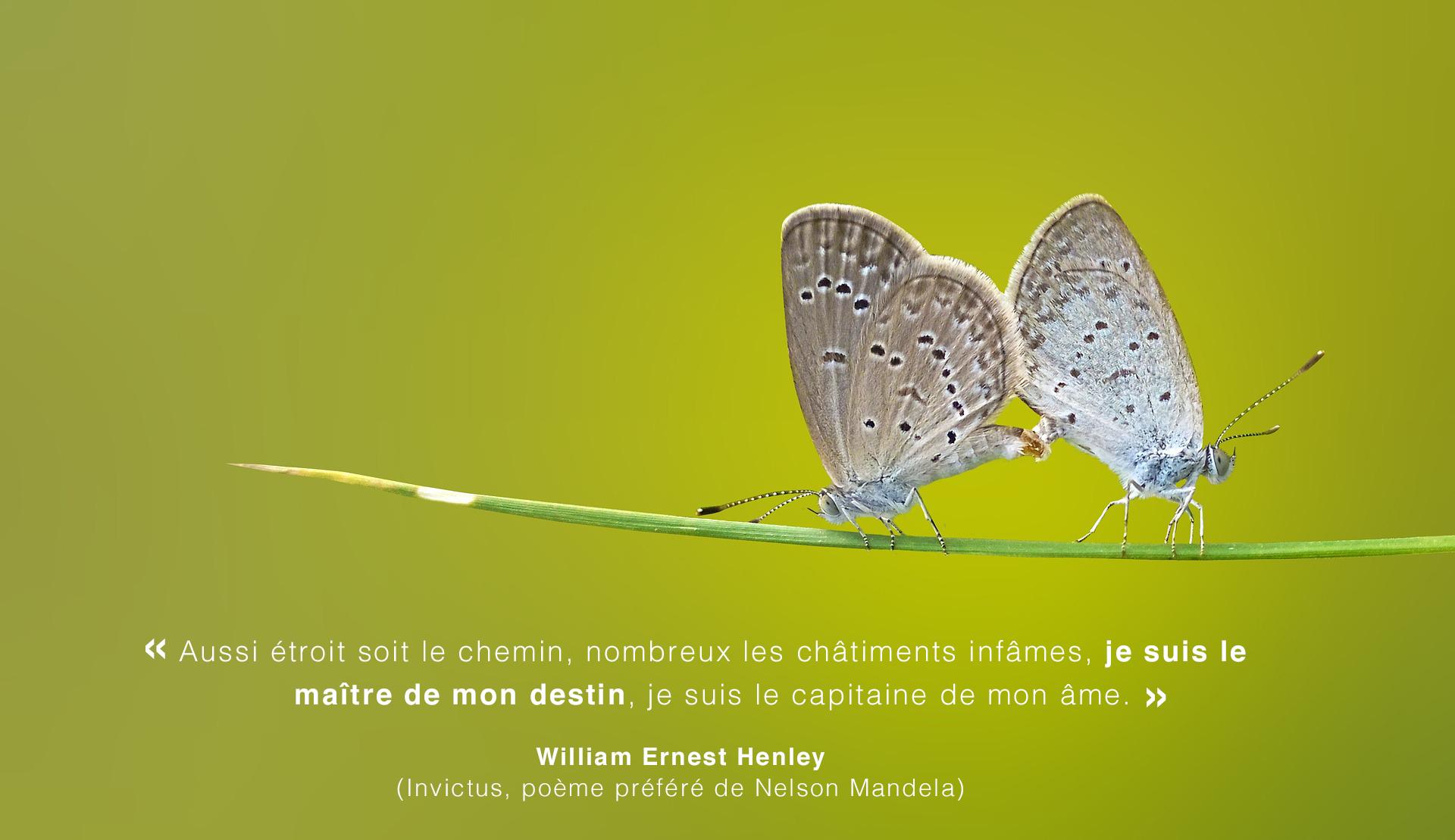 citation_invictus